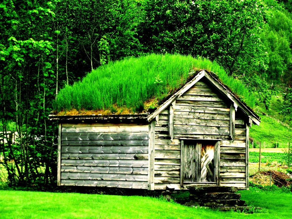 green roofs on shed